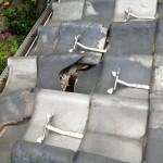 火災保険で自然災害は保証されますが、劣化修理は詐欺罪に問われます。