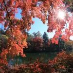 紅葉狩り☆雲場池