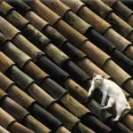 教えて!屋根屋さん。第9回「高い所で作業する屋根屋さん!高所で普段気を付けていることとは?」