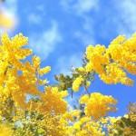 知ってました?花びら舞う春の、格好よくて風流な天気の和名