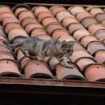 一番安い屋根材・屋根の種類や形状は?