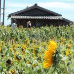 四国でたくさん見た瓦屋根。あぁ日本の風景。夏休みはあっけなく終わり