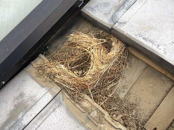 鳥の巣 事例